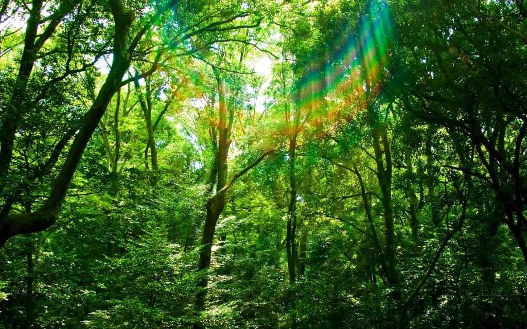 森は、こわい。そして、大好き。