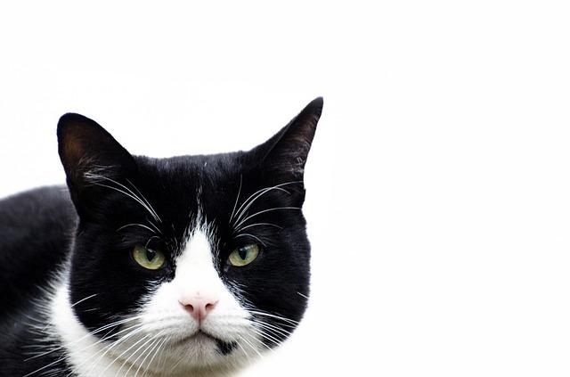 cat-314716_640