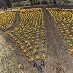 くじゅう花公園はからっぽだった!【花の植え替え時期・春には多くの人で溢れますように】